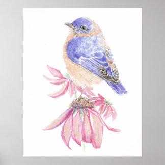Pájaro azul del jardín del Bluebird del este de la Póster