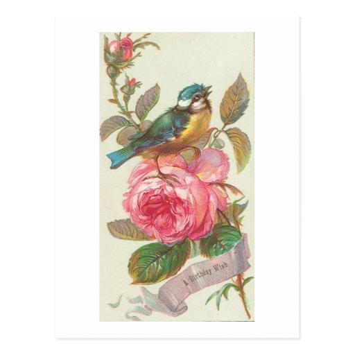 Pájaro azul del vintage y cumpleaños rosado de la postales