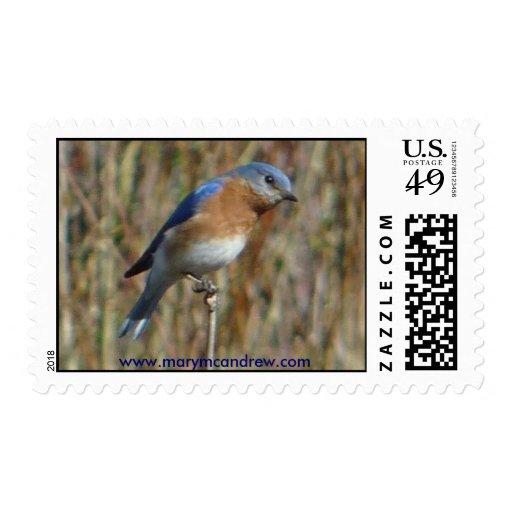 Pájaro azul franqueo