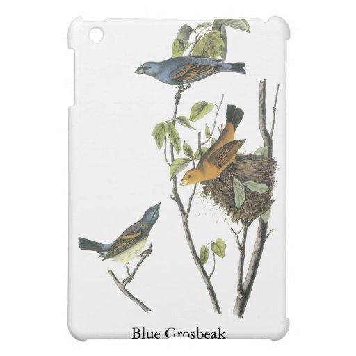 Pájaro azul John James Audubon