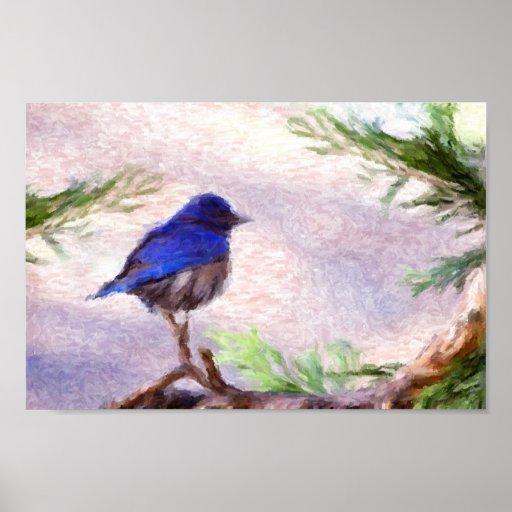 Pájaro azul poster
