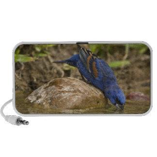 Pájaro azul que bebe en la charca del patio traser mp3 altavoz