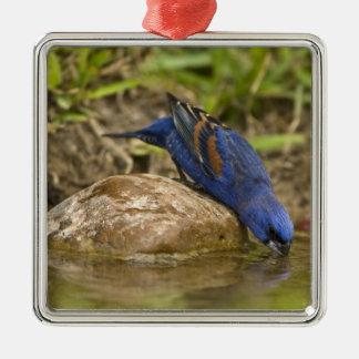 Pájaro azul que bebe en la charca del patio traser ornaments para arbol de navidad