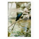 pájaro azul tarjeta postal