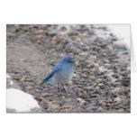 Pájaro azul tarjetón