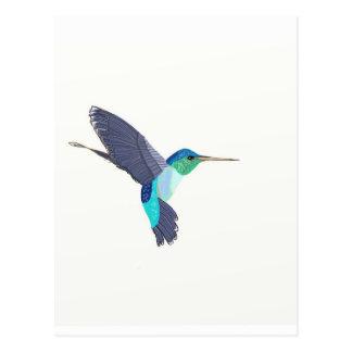 Pájaro azul y verde del tarareo tarjetas postales