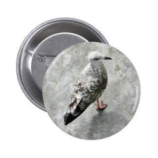 Pájaro Beaked negro Pin