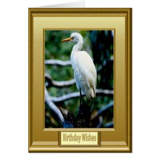 Pájaro blanco capítulo tarjeta de felicitación