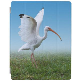 Pájaro blanco de Ibis con la extensión de las alas