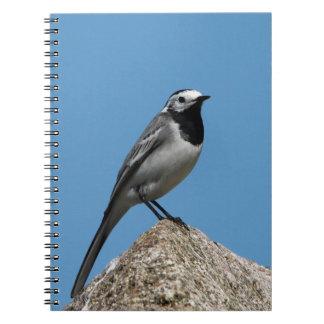 Pájaro blanco del Wagtail Libros De Apuntes