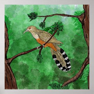 Pájaro Bobo Mayor/Puerto Rican Lizard Cuckoo Poste Poster