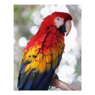 Pájaro bonito