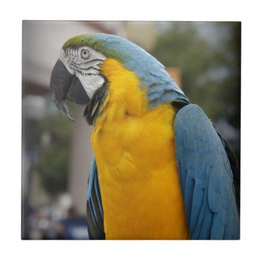 Pájaro bonito azulejo cuadrado pequeño