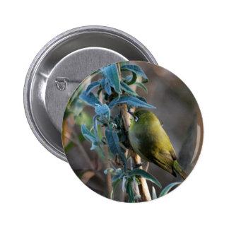 Pájaro camuflado en el árbol pin