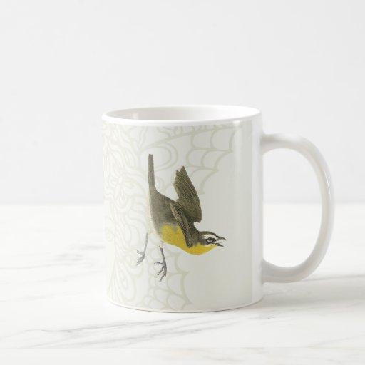 Pájaro cantante Amarillo-breasted de la charla Tazas
