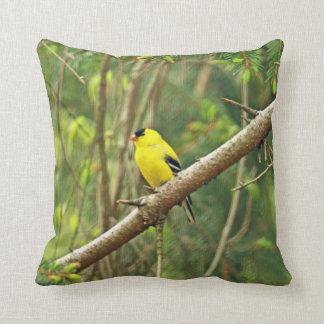 Pájaro cantante americano del Goldfinch - tristis Cojin