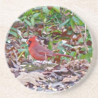 Pájaro cantante cardinal posavasos de arenisca