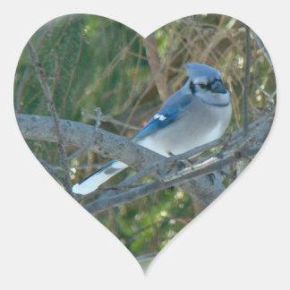 Pájaro cantante del arrendajo azul (cristata del pegatina en forma de corazón
