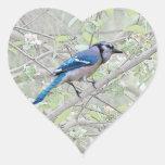 Pájaro cantante del arrendajo azul calcomanías corazones
