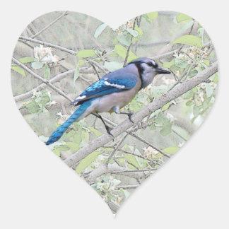 Pájaro cantante del arrendajo azul pegatina en forma de corazón