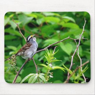Pájaro cantante Photogragh Mousepad Namaste Tapetes De Raton