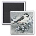 Pájaro capsulado negro del Chickadee Imán De Frigorífico