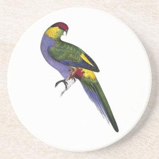 Pájaro capsulado rojo del loro del Parakeet Posavasos De Arenisca