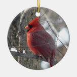 Pájaro cardinal de la fotografía-canción en el orn ornamentos de navidad