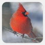 Pájaro cardinal rojo calcomanias cuadradas