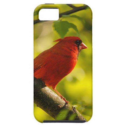 Pájaro cardinal rojo en árbol de Lois Bryan iPhone 5 Cárcasa