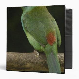Pájaro Carmesí-rumped Aulacorhynchus de Toucanet