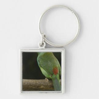 Pájaro Carmesí-rumped Aulacorhynchus de Toucanet Llavero Personalizado