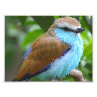 Pájaro colorido foto