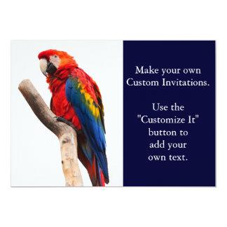"""Pájaro colorido hermoso del loro del Macaw del Invitación 5"""" X 7"""""""
