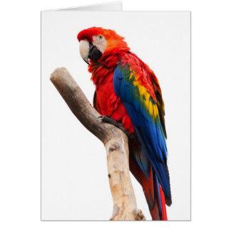Pájaro colorido hermoso del loro del Macaw del Tarjeta De Felicitación