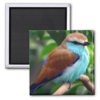 Pájaro colorido imán cuadrado