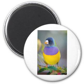 Pájaro colorido imán redondo 5 cm