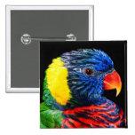 Pájaro colorido pins