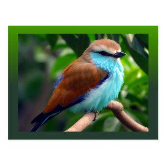 Pájaro colorido postal