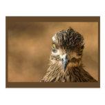 Pájaro… con actitud postal