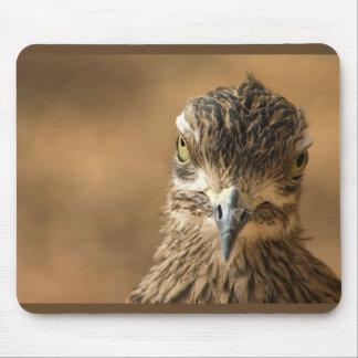 Pájaro… con actitud tapete de ratones