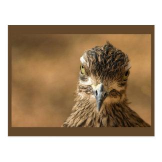 Pájaro… con actitud tarjeta postal