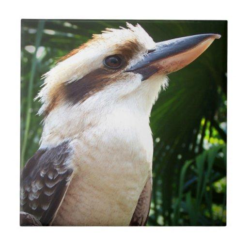 pájaro contra Kookaburra verde Azulejos