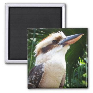 pájaro contra Kookaburra verde Imán Cuadrado