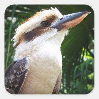 pájaro contra Kookaburra verde Pegatina Cuadrada