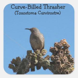 pájaro Curvar-cargado en cuenta de Thrasher Pegatina Cuadrada