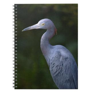 Pájaro de agua azul de Heron la Florida Libretas Espirales