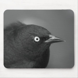 Pájaro de Alfred Hitchcock Mousepad