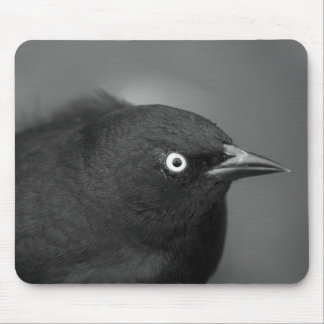 Pájaro de Alfred Hitchcock Tapete De Ratón