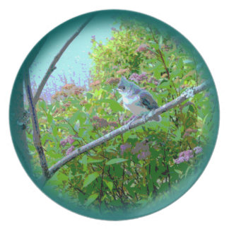 Pájaro de bebé del novato del Titmouse copetudo Plato De Comida